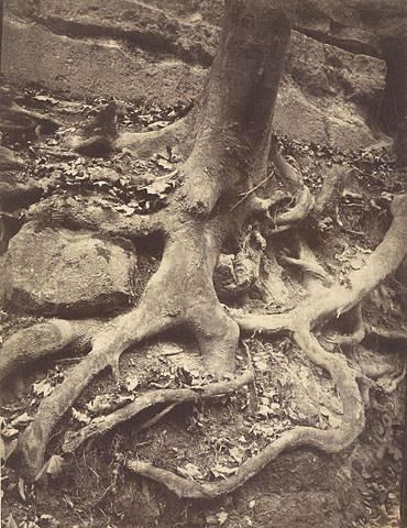 Tree Roots, Saint-Cloud