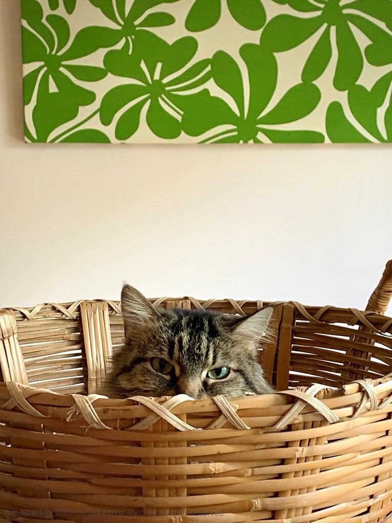Alice-basket_2283