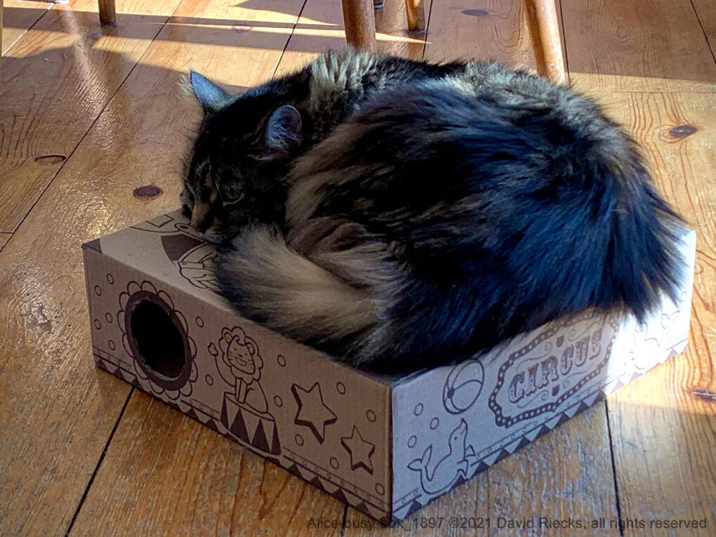 Alice-busy-box_1897