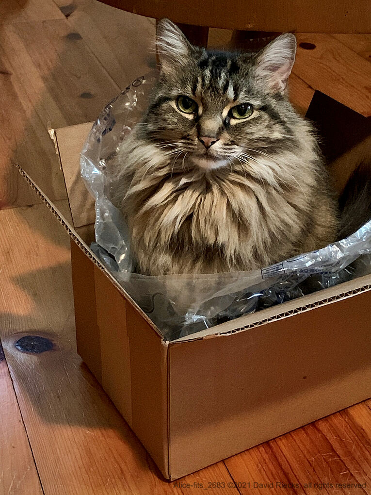 Alice finds the box fits just right.