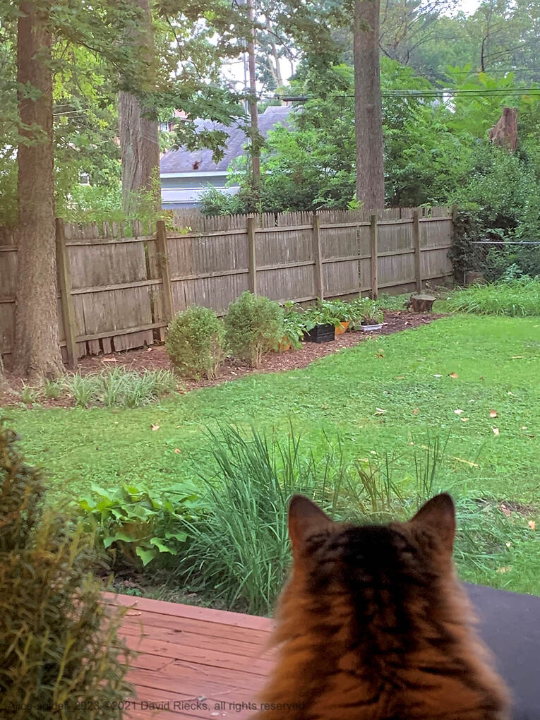 Our tabby cat Alice keeps an eye on a spider feeding on it's prey outside the kitchen window.
