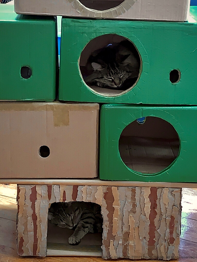 Alice and Tigerlily sleeping in cardboard tree.