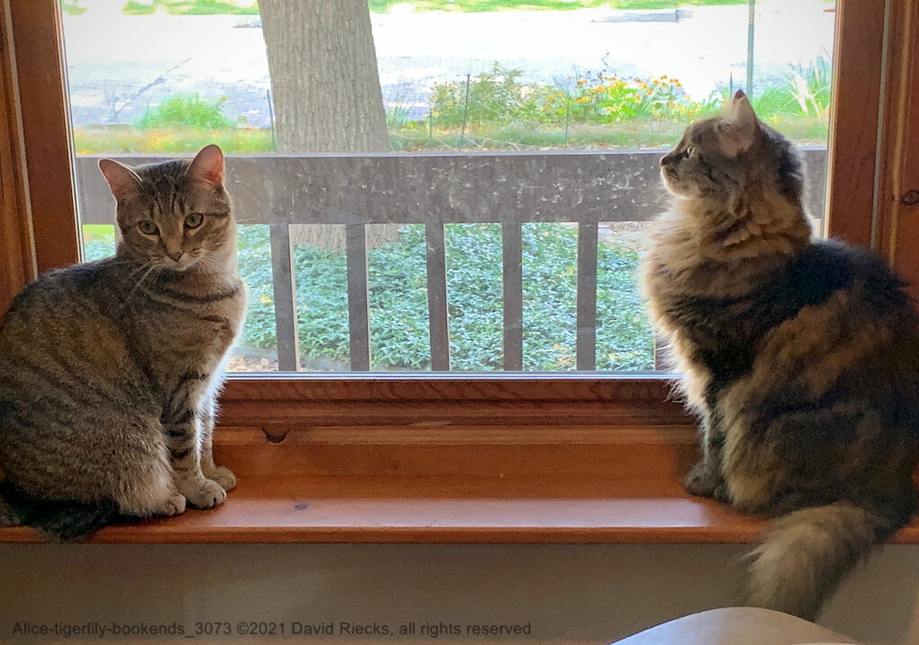 Our cats Alice and Tigerlily look like bookends while sitting in the front window sill on a sunny day.