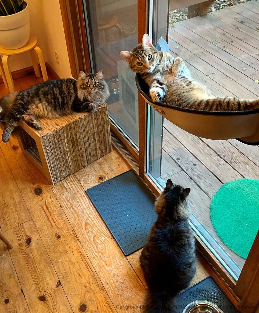 A group photo of many of the cats: Miles on the cube, Tigerlily in the window hammock, and Frodo looking outside.