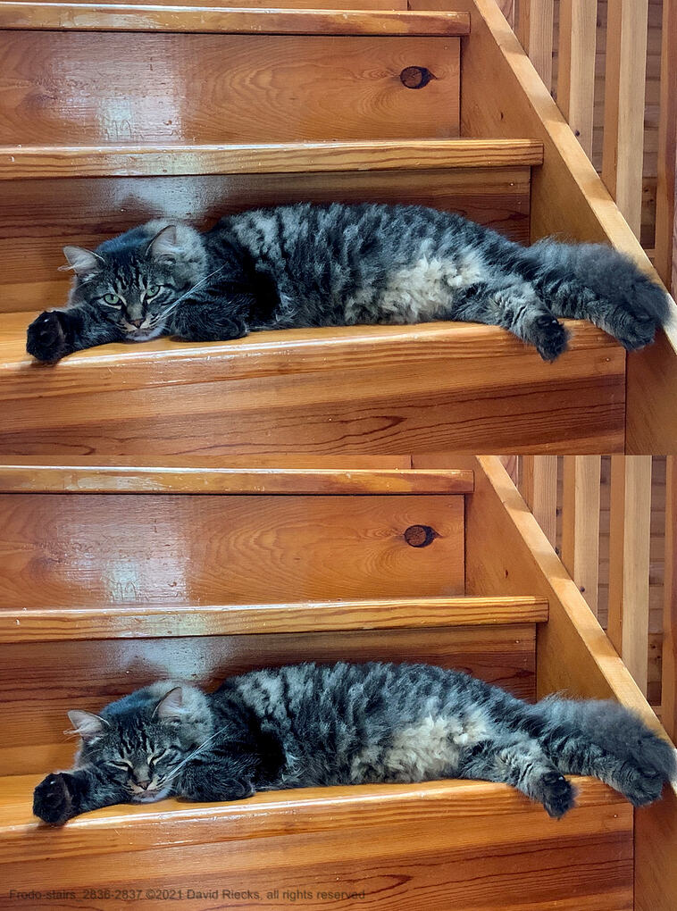 Frodo does his best to stay awake while lounging on the stairs.