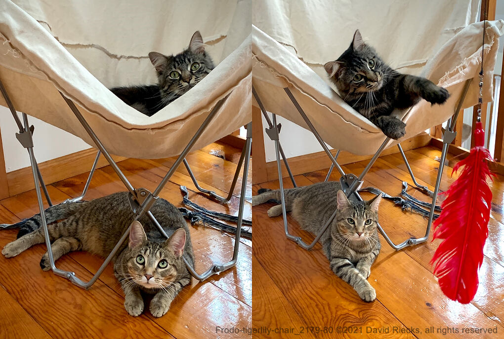 Frodo-tigerlily-chair_2180