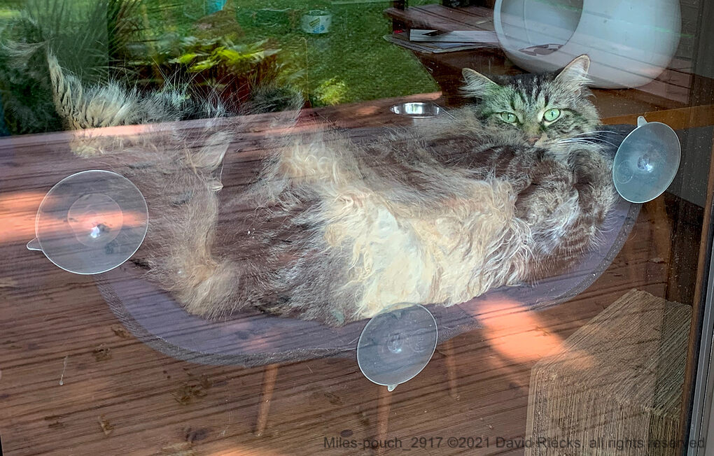 Our tabby cat Miles shows lots of fluffy fur from outside when he lounged in the window cat hammock.