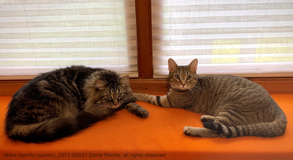Miles-tigerlily-cushion_2373
