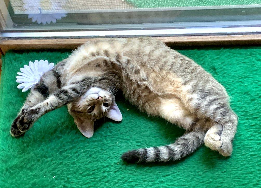 Tiger-lily-green-cushion_1051