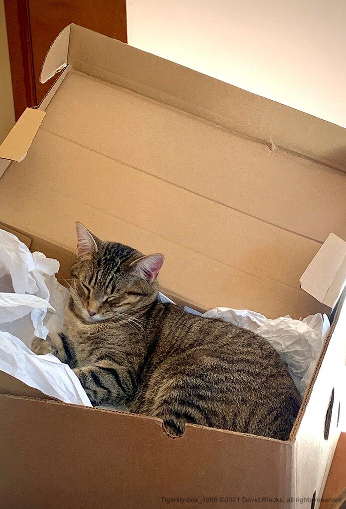 Tigerlily-box_1886