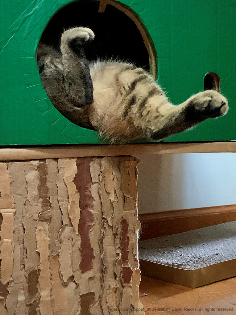 Tigerlily (the cat) asleep in the cardboard tree, with her legs splayed out one of the portholes.