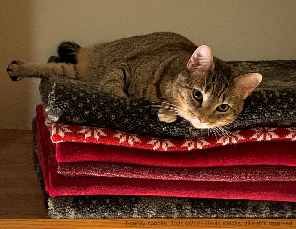 Tigerlily (the cat) lays on a stack of blankets, with light illuminating her from below (and looking a bit spooky).