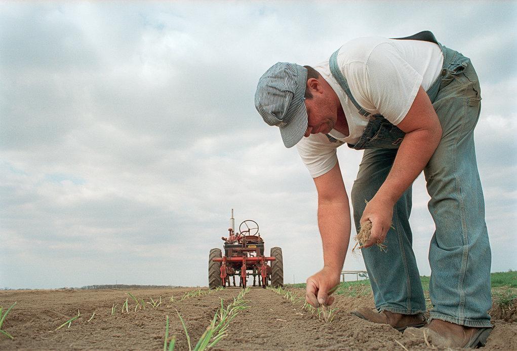 Moore organic produce and livestock farm, Watseka, Illinois