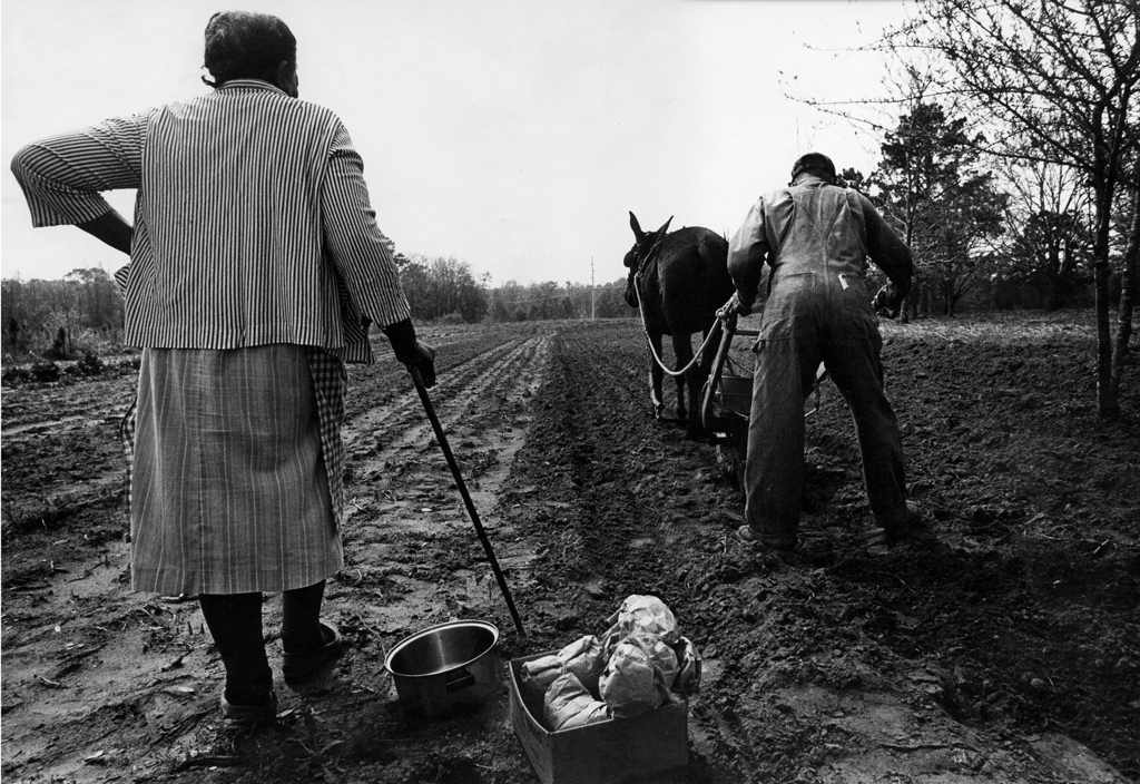 Mule and plow, Tallahassee FL, 1970s