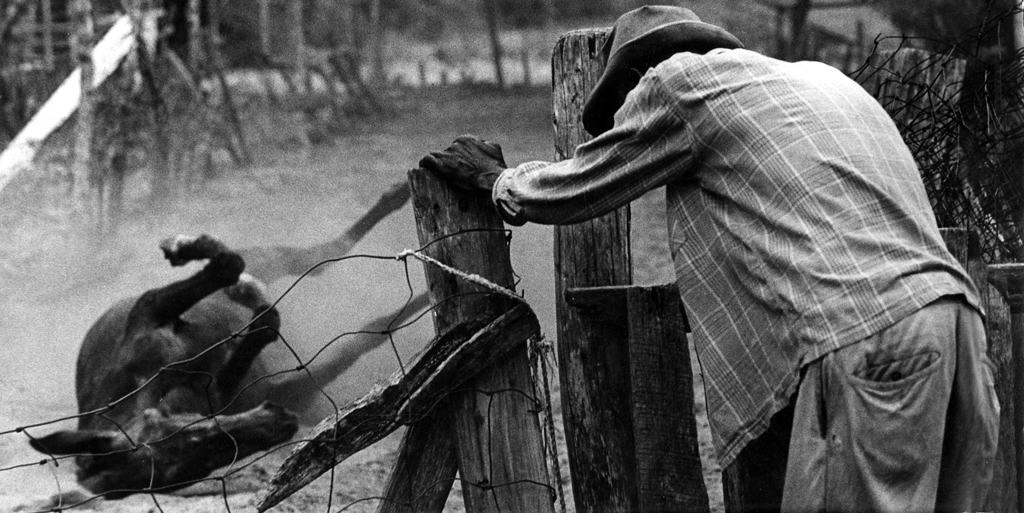 Robert Jackson and mule, 1970