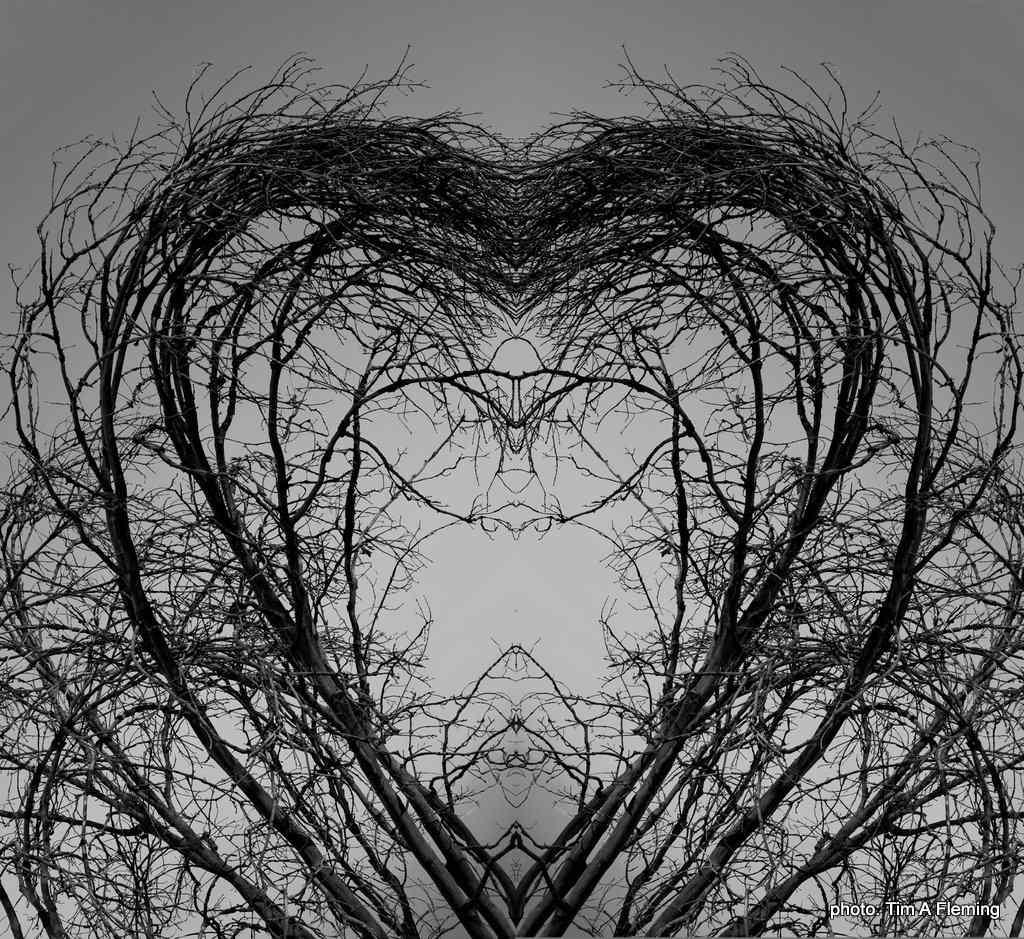 Tree Line as a Heart
