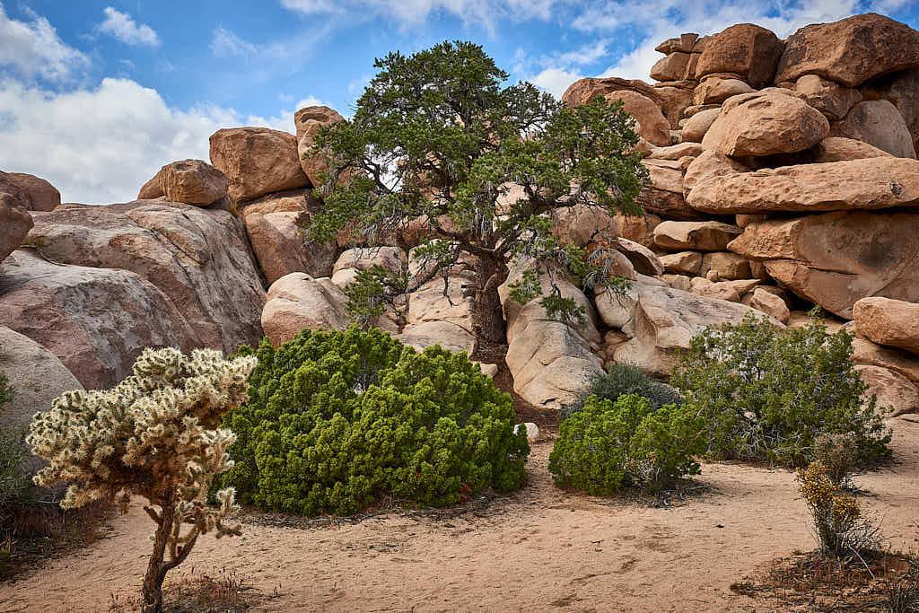 Desert scene near Hidden Valley in Joshua Tree National Park