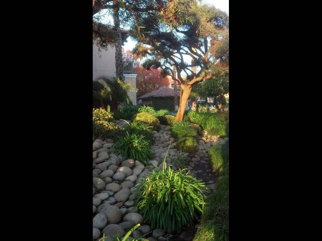 California Central Valley Foliage