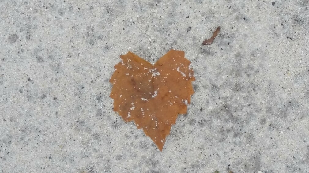 a gold colored leaf that looks like a heart laying on white sand