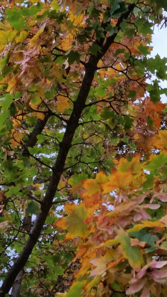 Fall leaves with branch