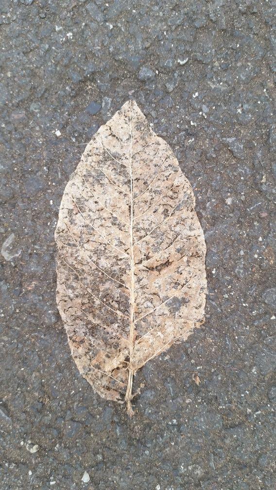 Fragmenting Leaf