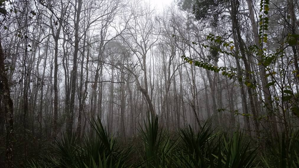 on the swamp road