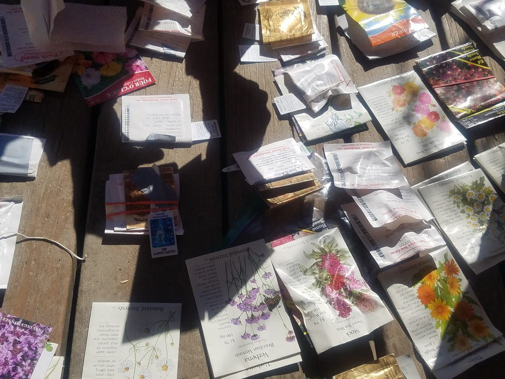 sorting seeds in the sunshine