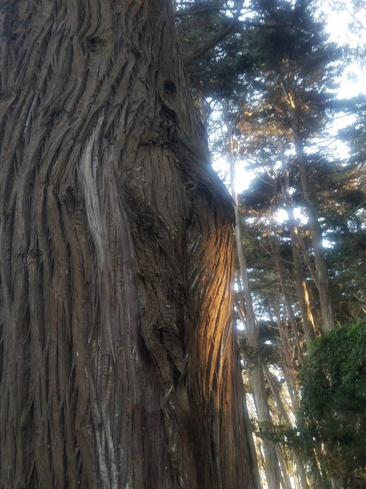 Presidio cypress 6470