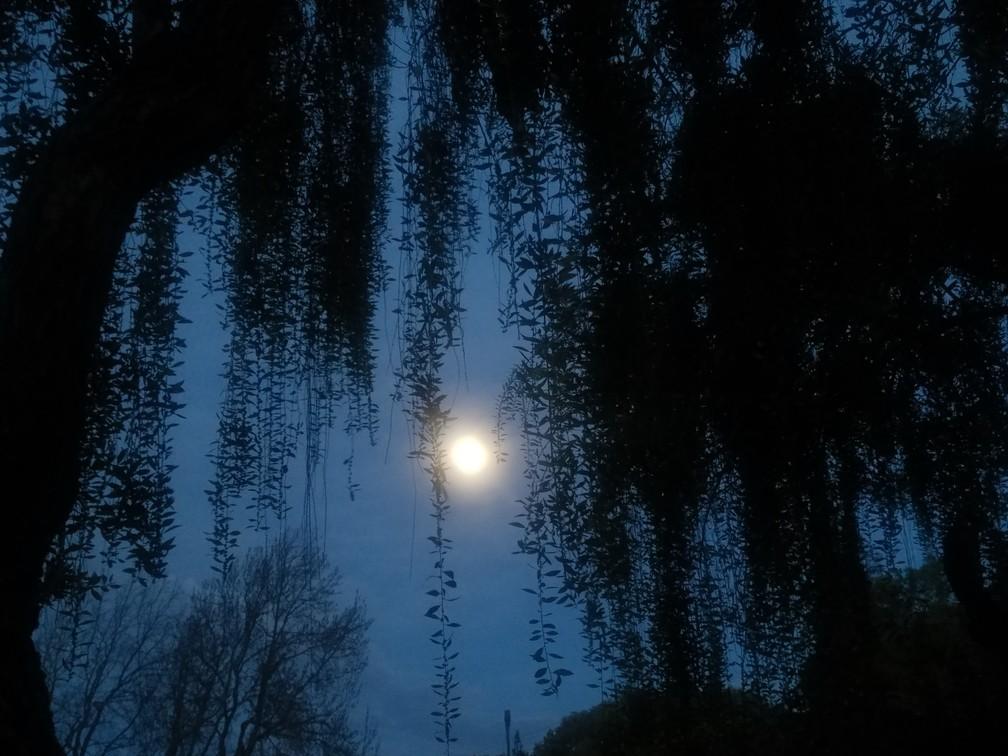 Waxing, Gibbous Moon