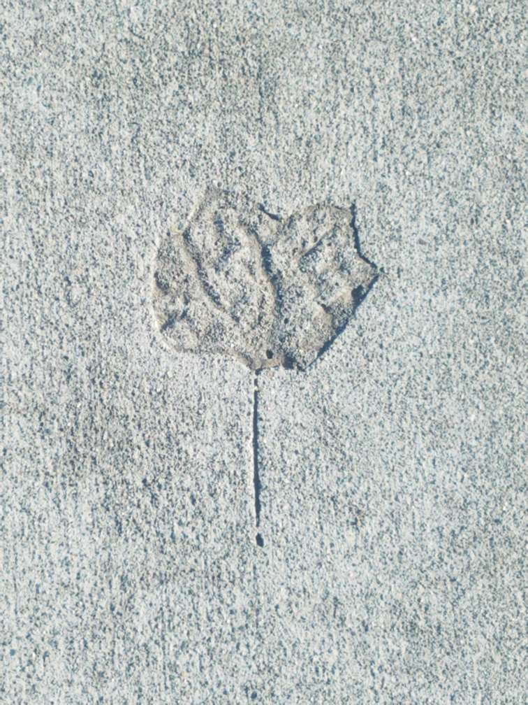 an impression of a leaf in concrete