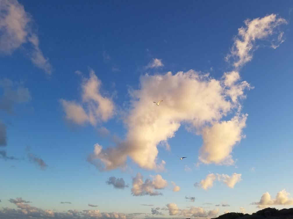Bird in Front of Cloud