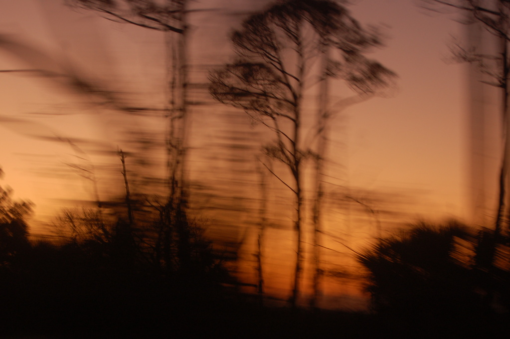 an abstraction of palmettos and pine trees blurred against a twilight sky
