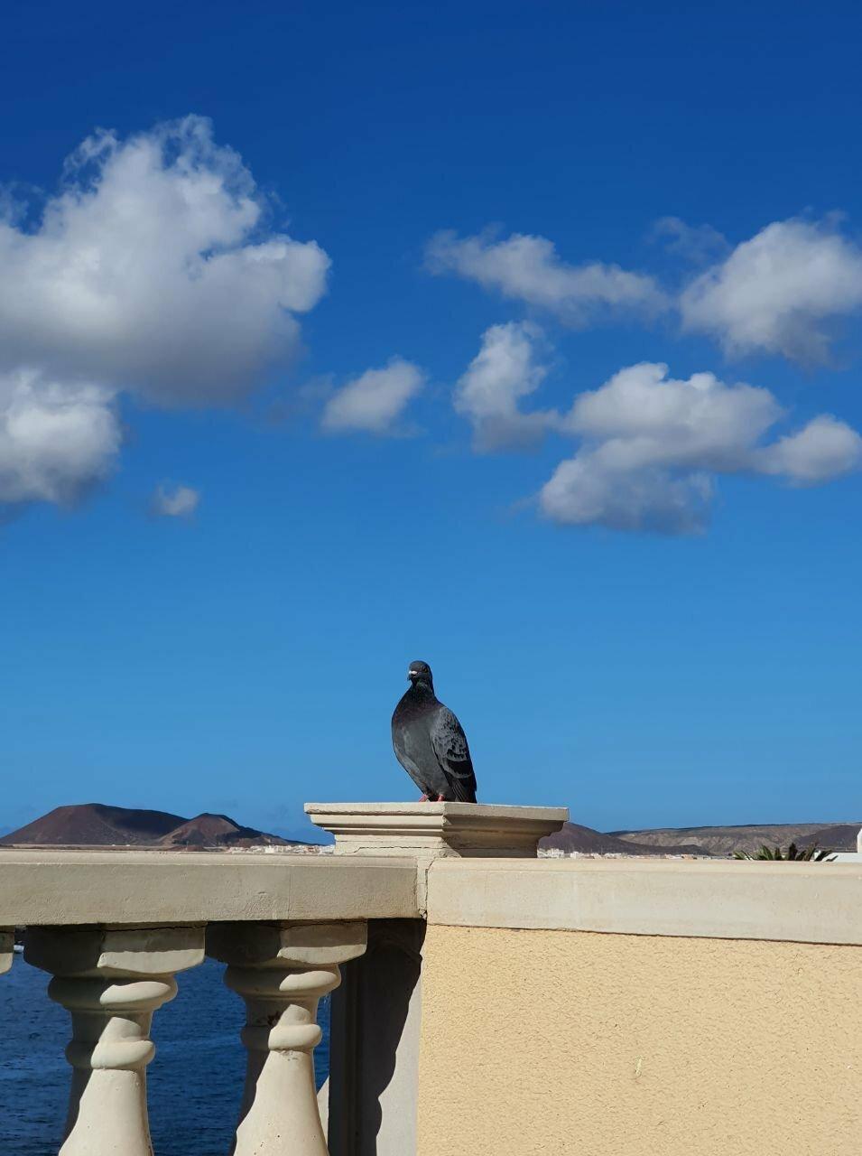 Bird as Statue