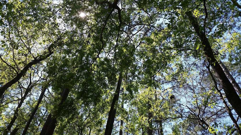 tree ceiling gmund trail