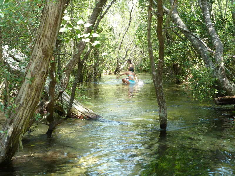 Wading through a Canopied River