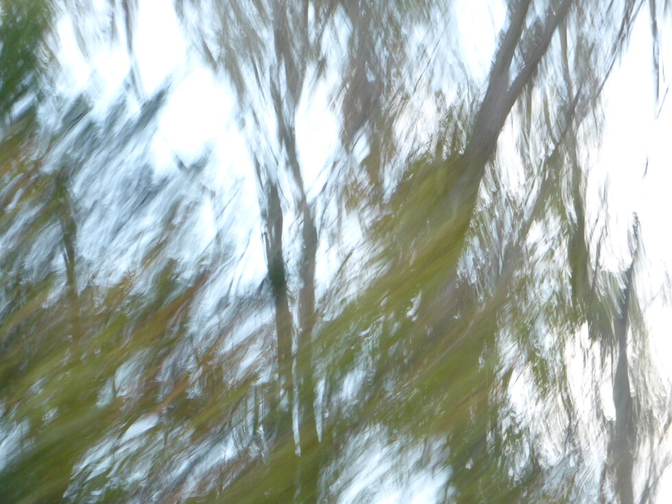 an abstract of blurred trees made while riding in a car in Northwest Florida, Autumn 2020.