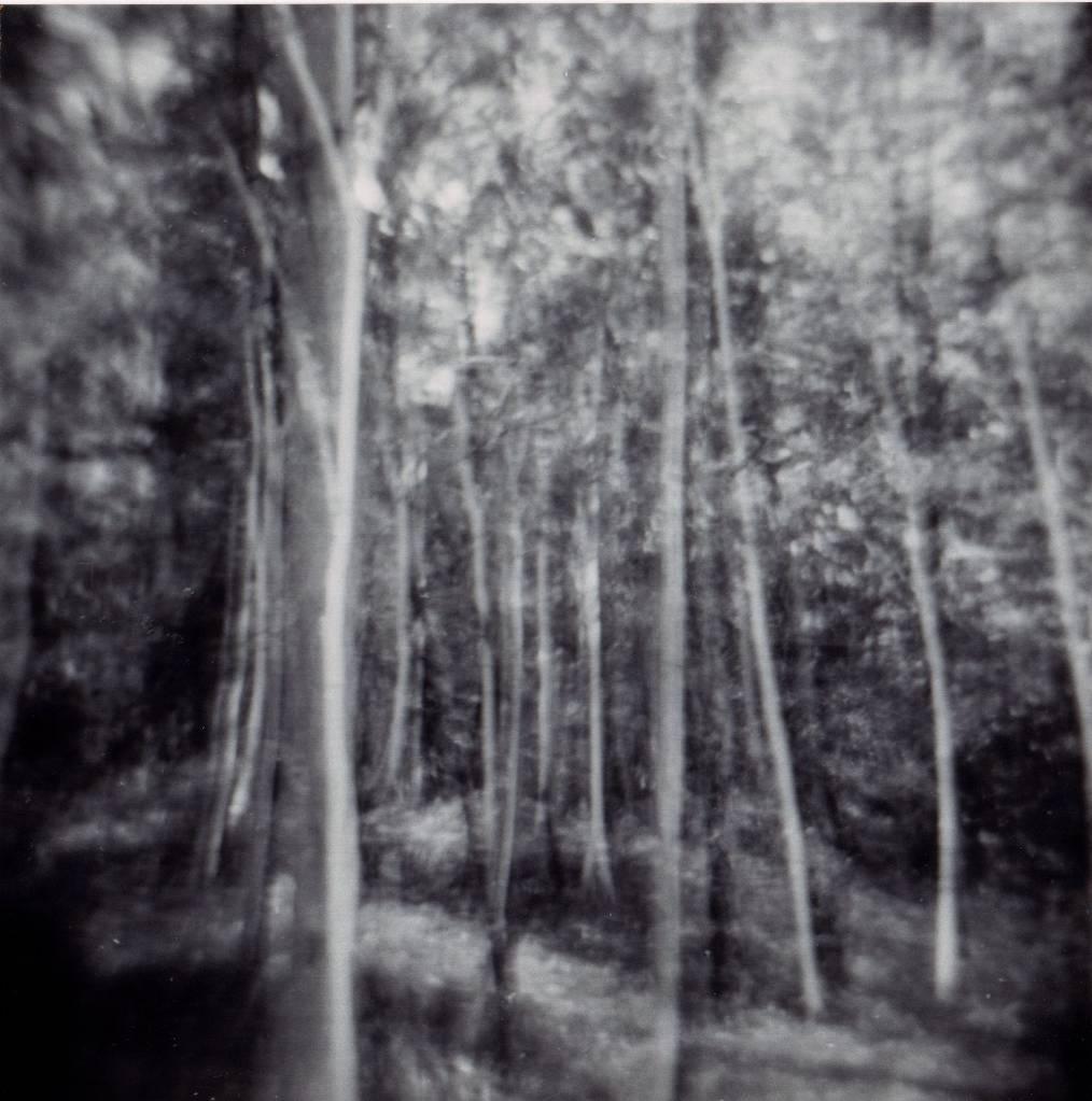 Art Farm Trees