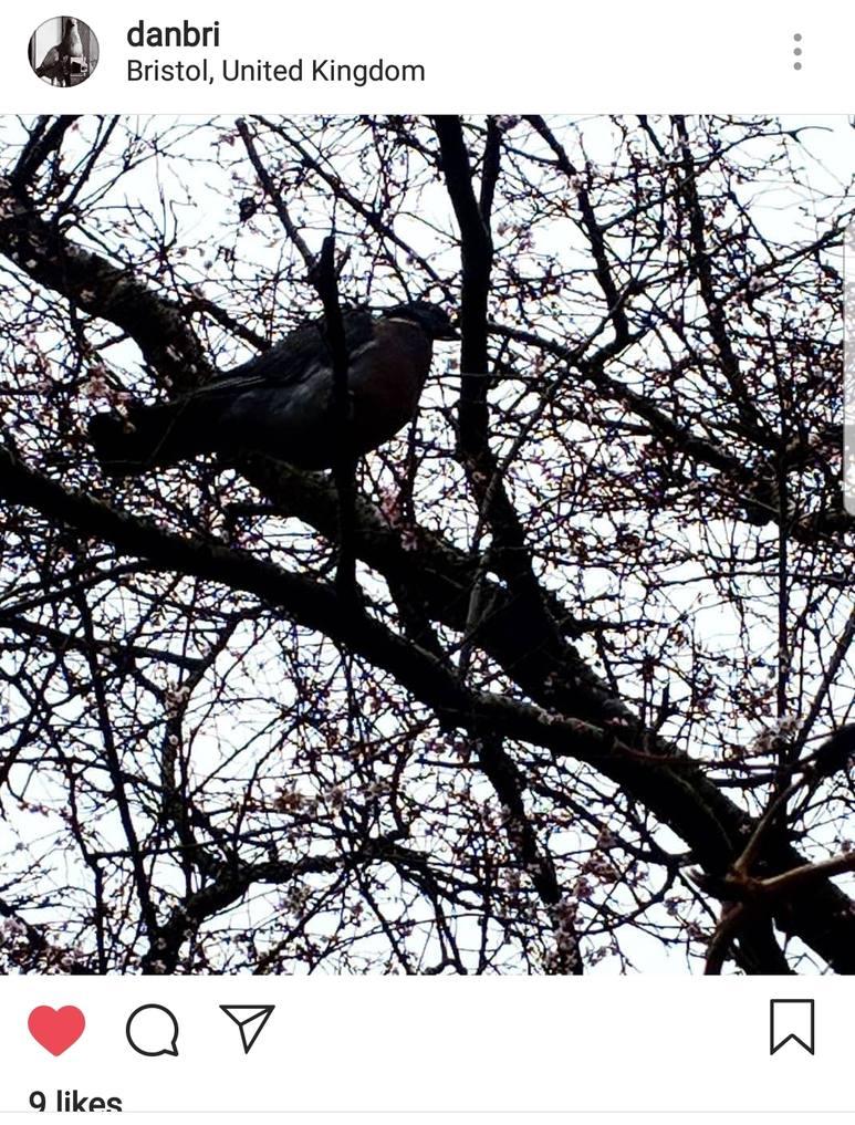 Dan Brickley Pigeon silhouette from Instagram