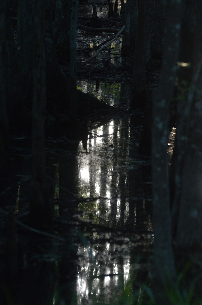 Late Afternoon Swamp Light