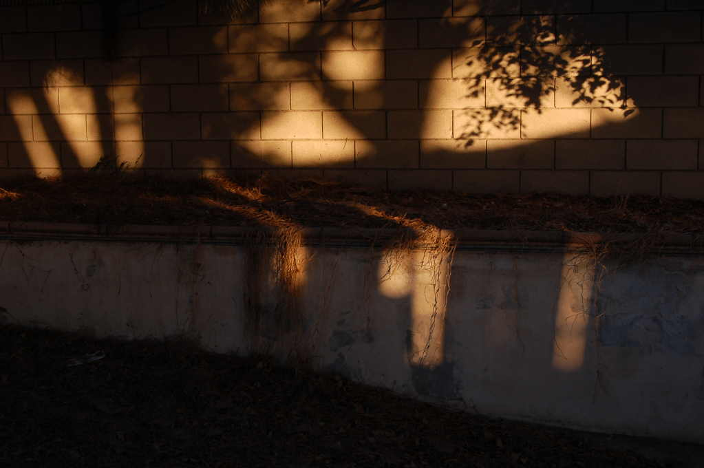 Landscape of Shadow