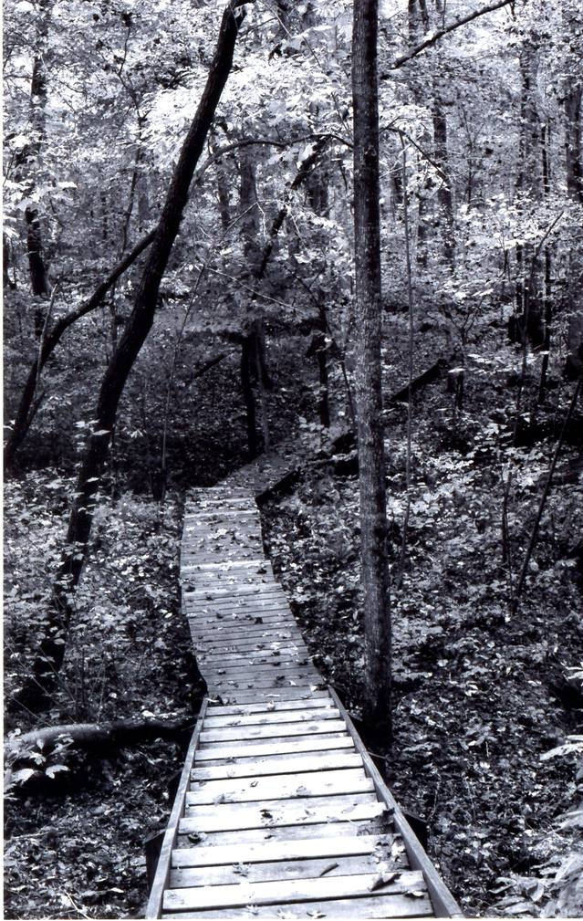 a black and white picture of a wooden walkway through the woods of Tennessee in the autumn