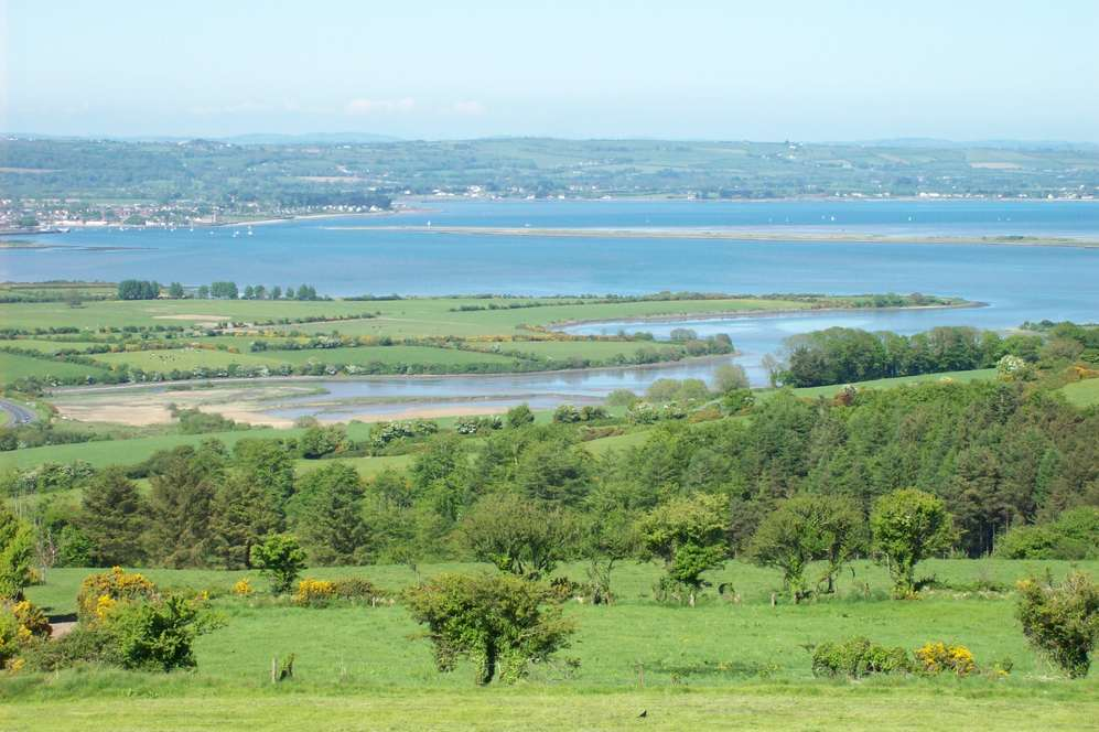 Trees and the Irish Sea