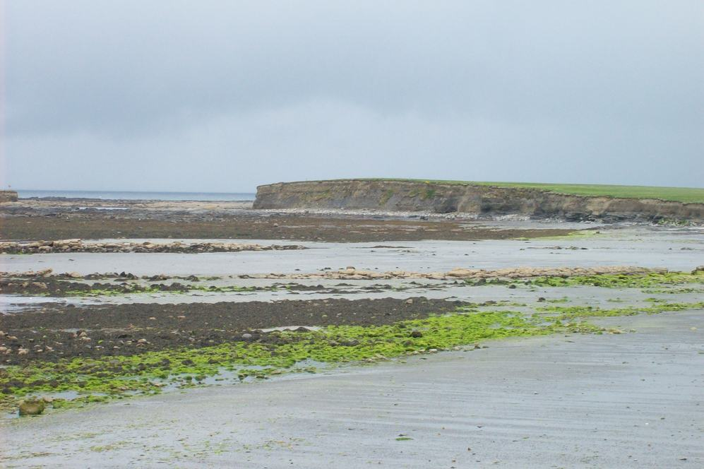 Irish Mudflats