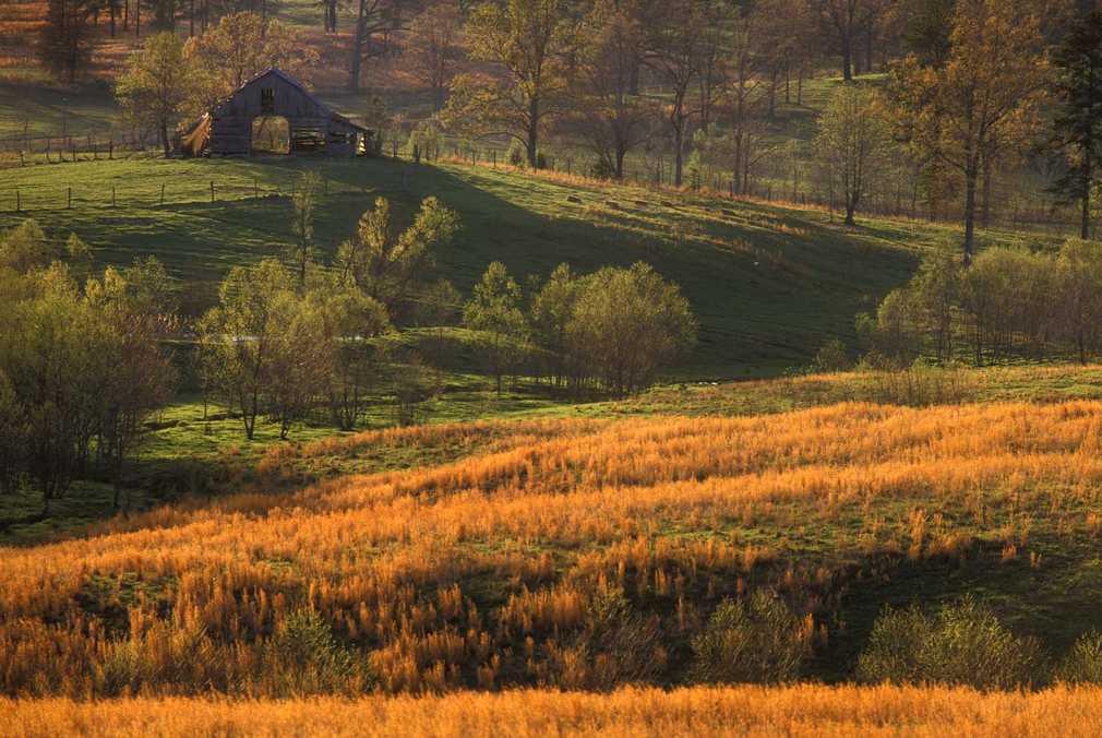 Barn in golden field