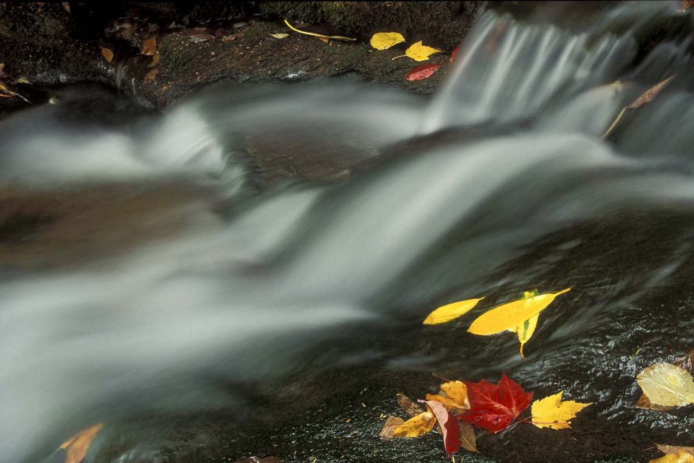 Mountain stream with fall leaves, close up