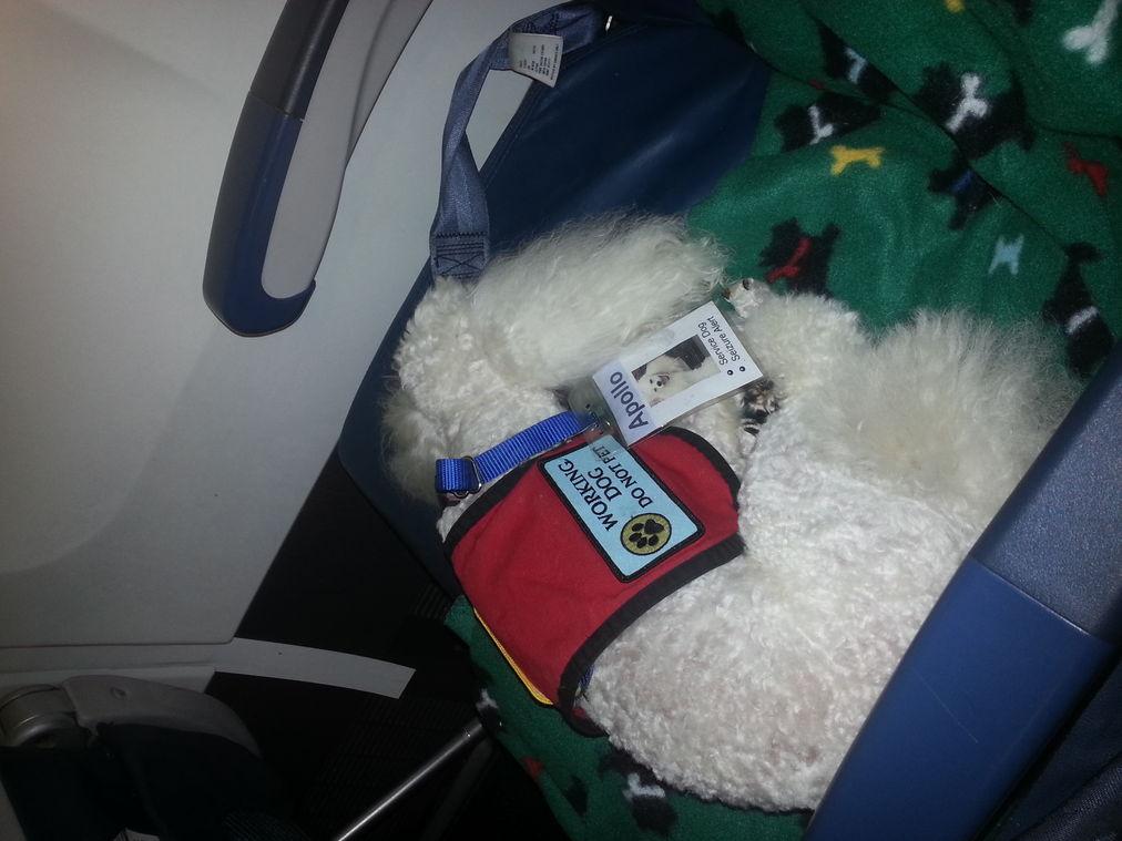 Apollo on airplane