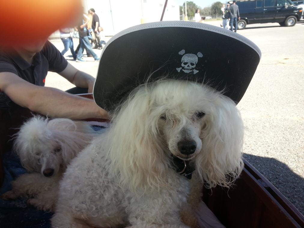 Emilio pirate hat