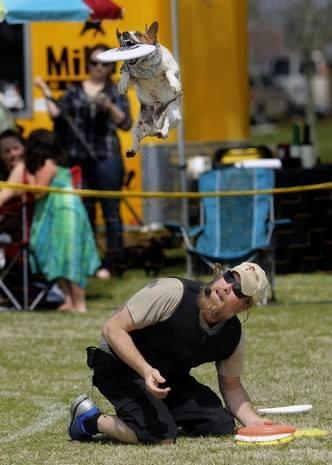 Trick Frisbee Dog Performance