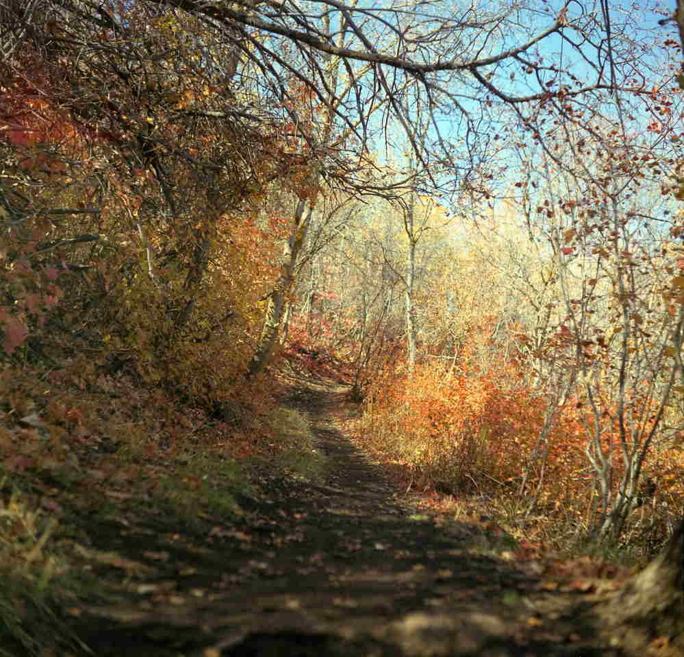 Chroma path