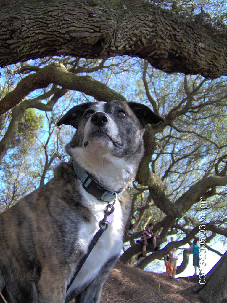 Dog Against the Trees